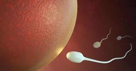 Mối nguy hại của tinh trùng yếu